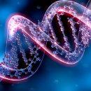 Генетики выяснили, почему люди живут дольше мух и обезьян