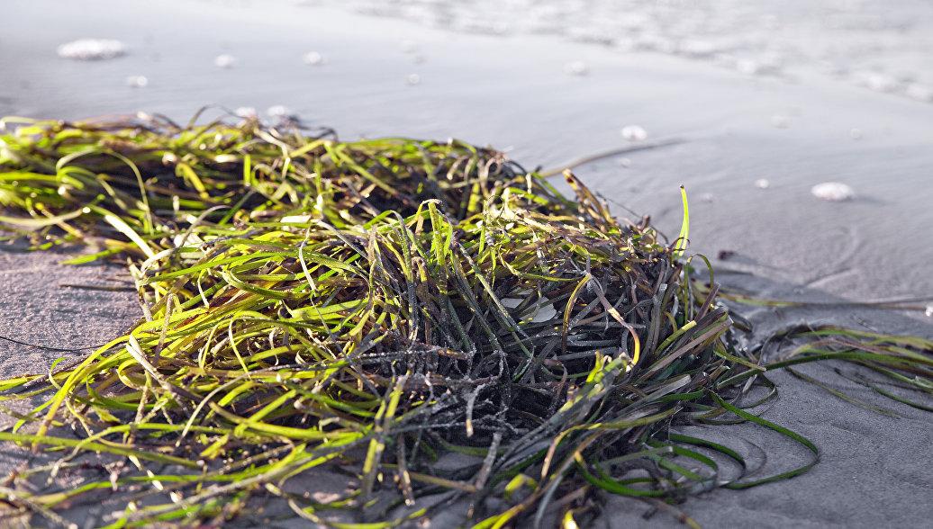 Ученые выяснили, когда суша покрылась первыми растениями