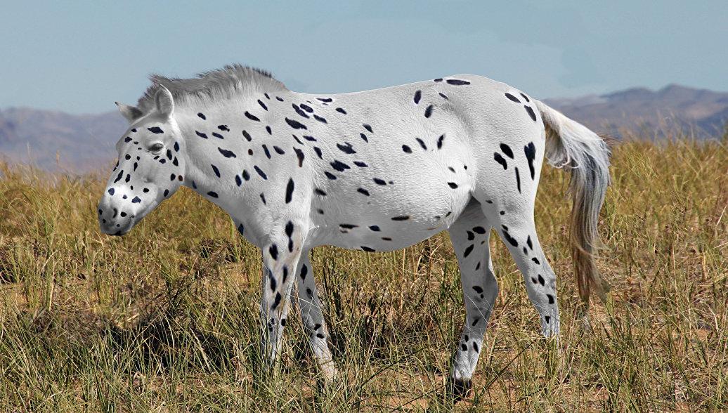 Лошади Пржевальского лишились звания предка всех скакунов мира