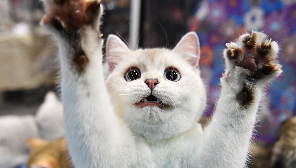 В Красноярске подростки засунули кошку в раскаленную духовку