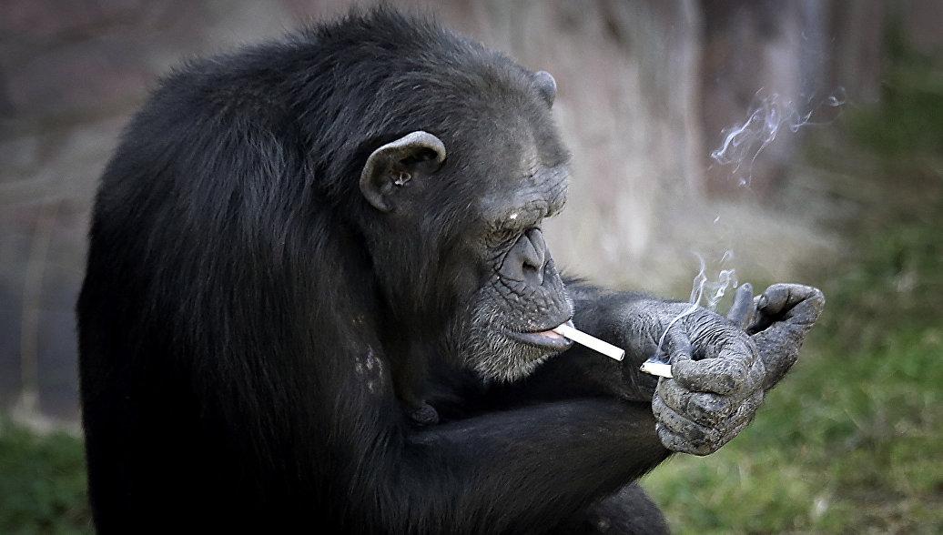 Ученые назвали ключевую особенность всех разумных существ