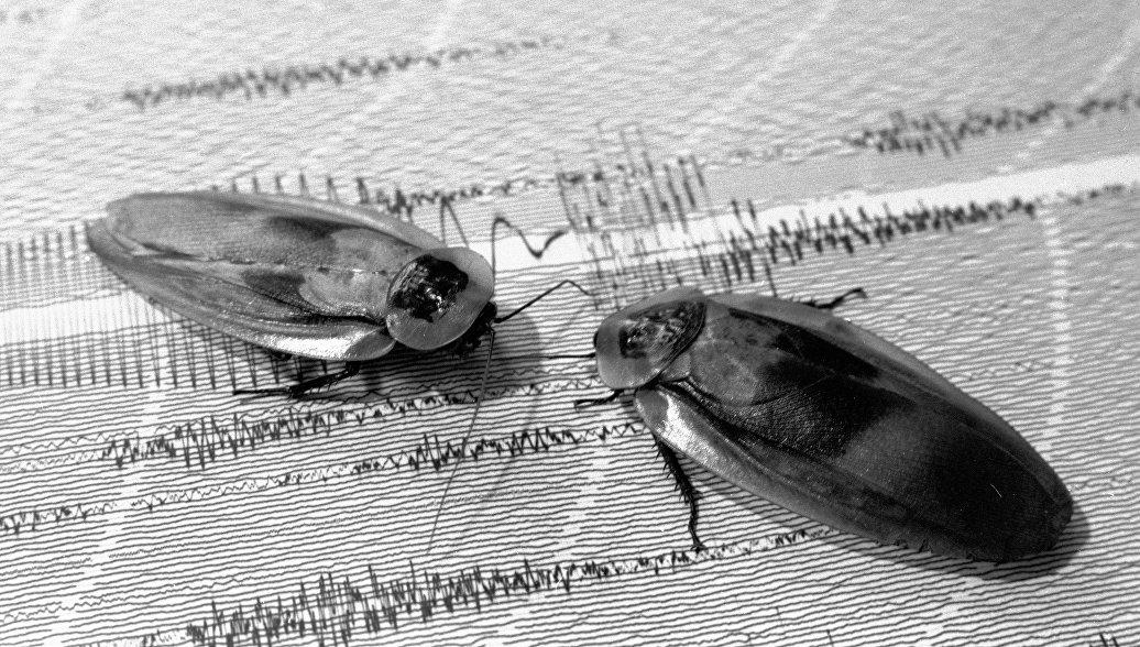 Генетики выяснили, где жили предки всех современных тараканов