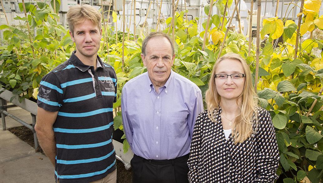 Биологи из США создали ГМО-табак, способный расти в пустыне