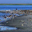 На пляже в США нашли морского монстра