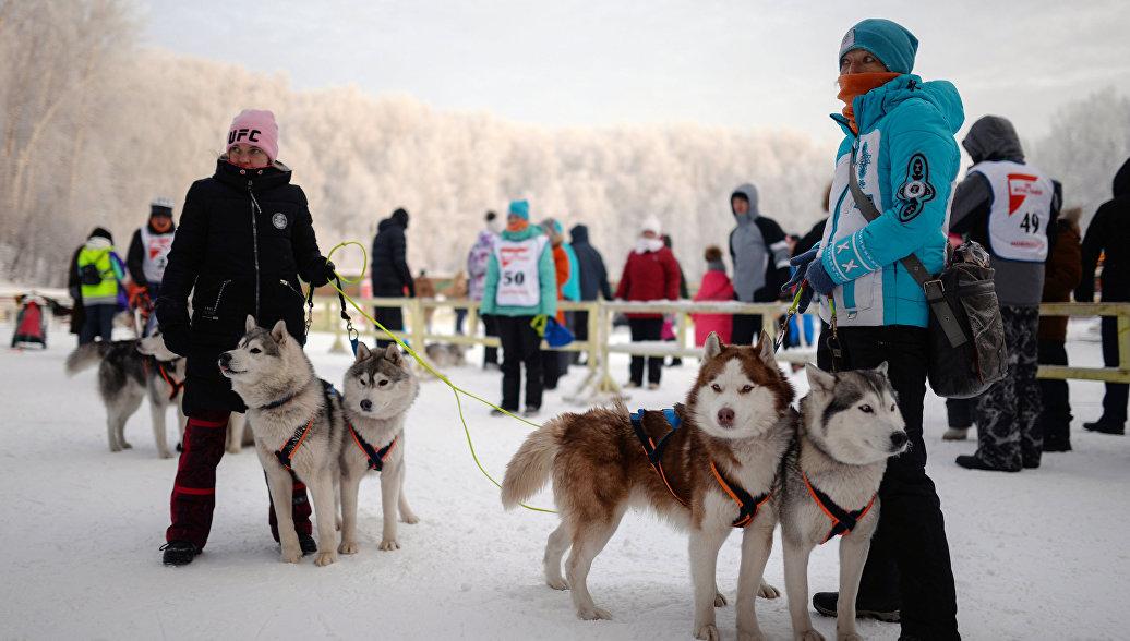 На Камчатке стартовала гонка на собачьих упряжках