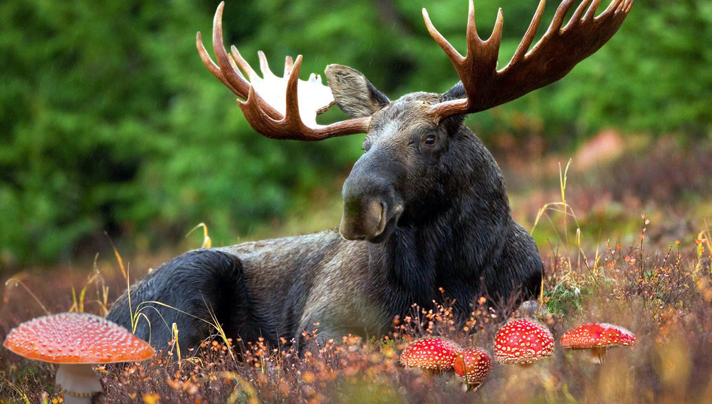 Лесной тоник: на чем