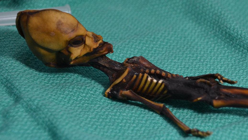 Ученые расшифровали ДНК миниатюрного
