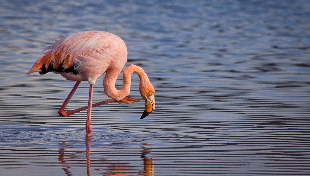 В Феодосии на пляже заметили фламинго