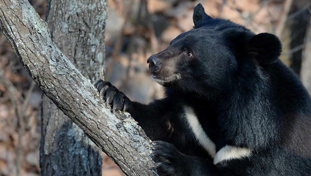Самарский зоопарк позаботится о найденных на окраине города медведях