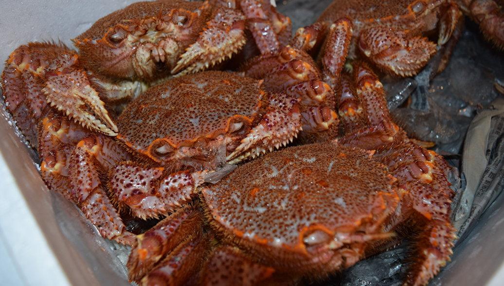 Роспотребнадзор рассказал о контроле за качеством рыбы и морепродуктов