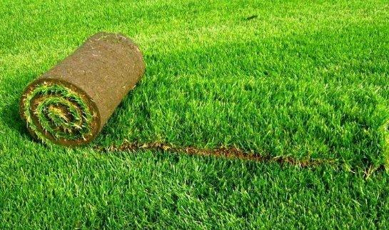 Виды рулонного покрытия газонов