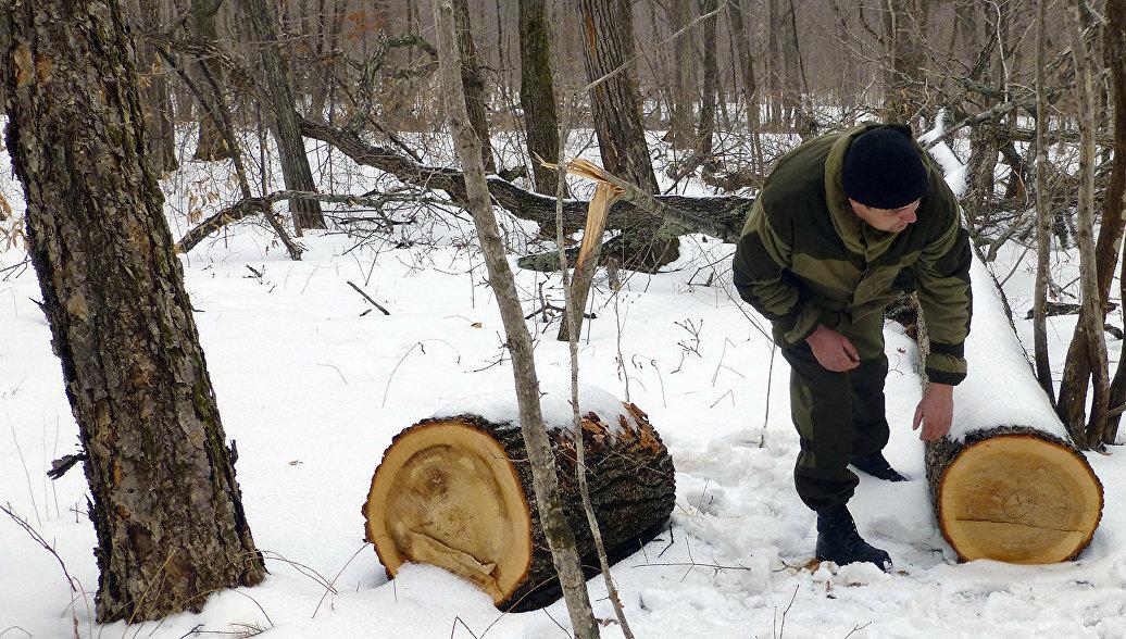 Гутенев: в России значительно сокращаются объемы незаконных вырубок лесов