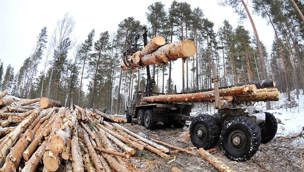 ОНФ добивается прекращения незаконной вырубки леса в Ивановской области