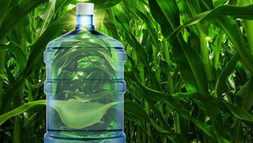 Пластмасса вместо компоста: растительным отходам нашли применение