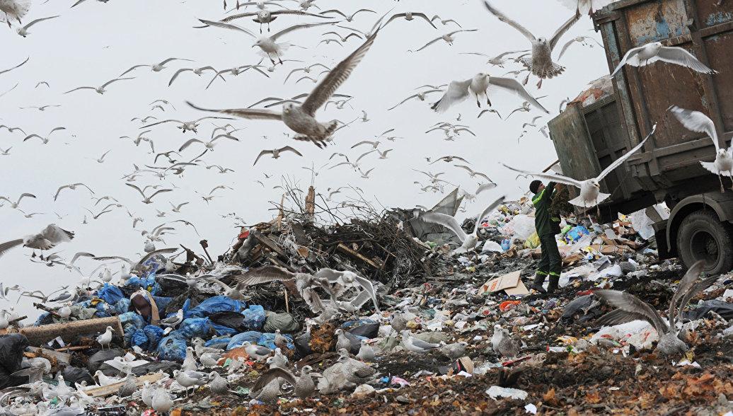 Российские ученые разработали новую технологию переработки мусора