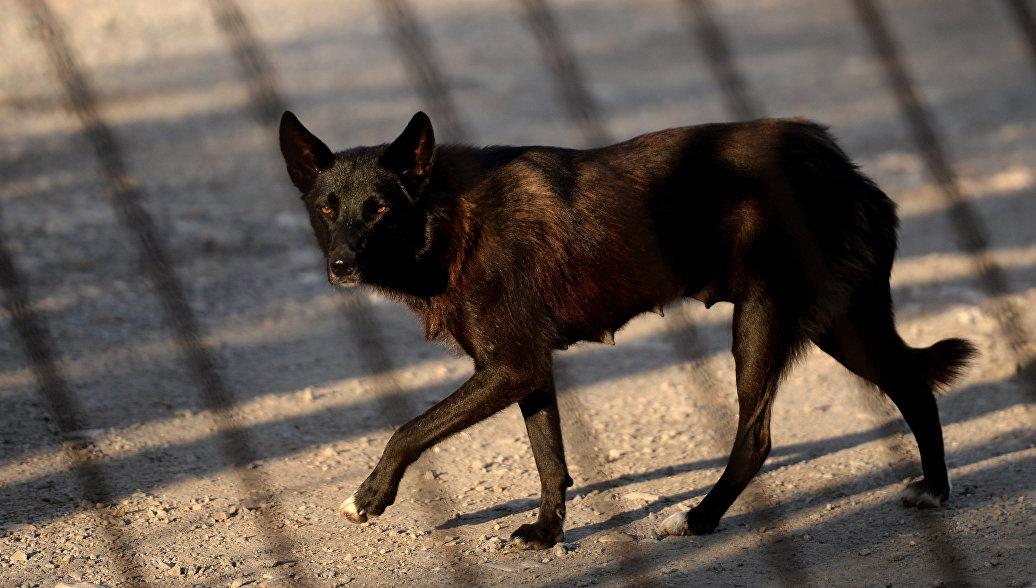 В Калининграде начали отлов бездомных собак перед ЧМ-2018