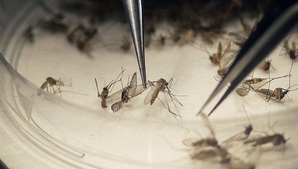 Найдена таблетка, убивающая комаров