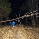 В Подмосковье убрали с дорог более 450 поваленных ураганом деревьев