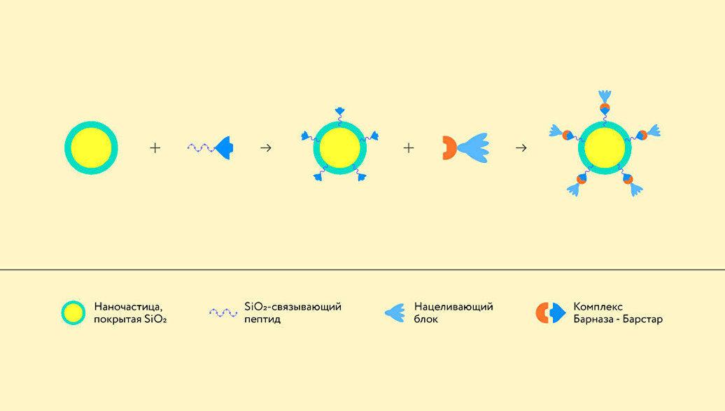Российские ученые создали универсальный