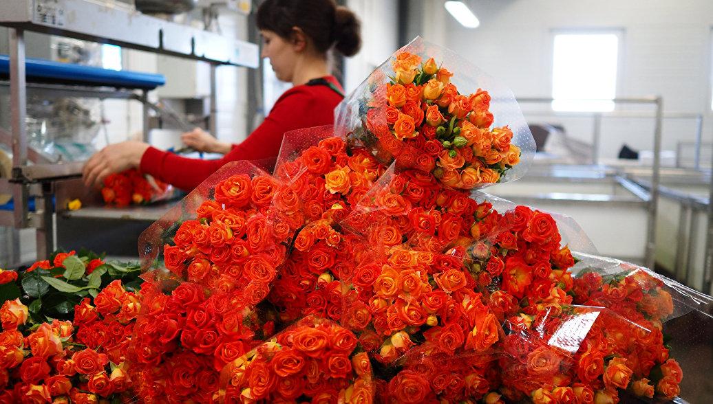 Ученые нашли способ сделать розы более ароматными и яркими