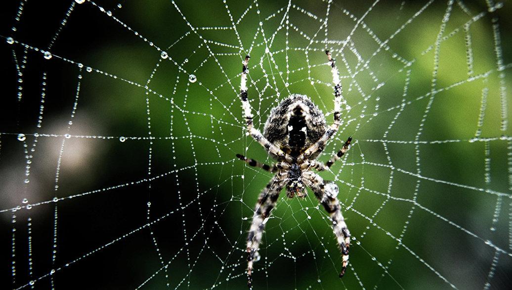 Учёные в Британии изучают паучьи прыжки для разработки микророботов