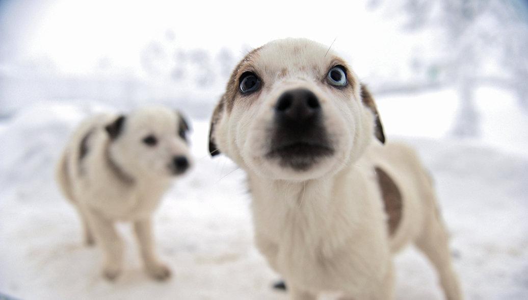 Названа неожиданная польза от домашних животных
