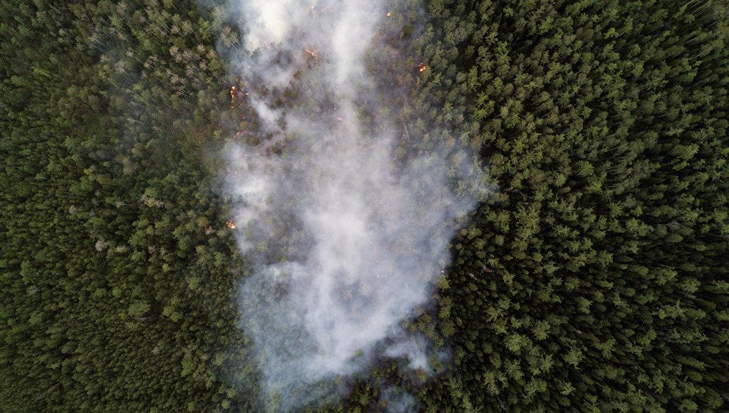 На Дальнем Востоке сгорело около 3,7 тысячи гектаров территории за сутки