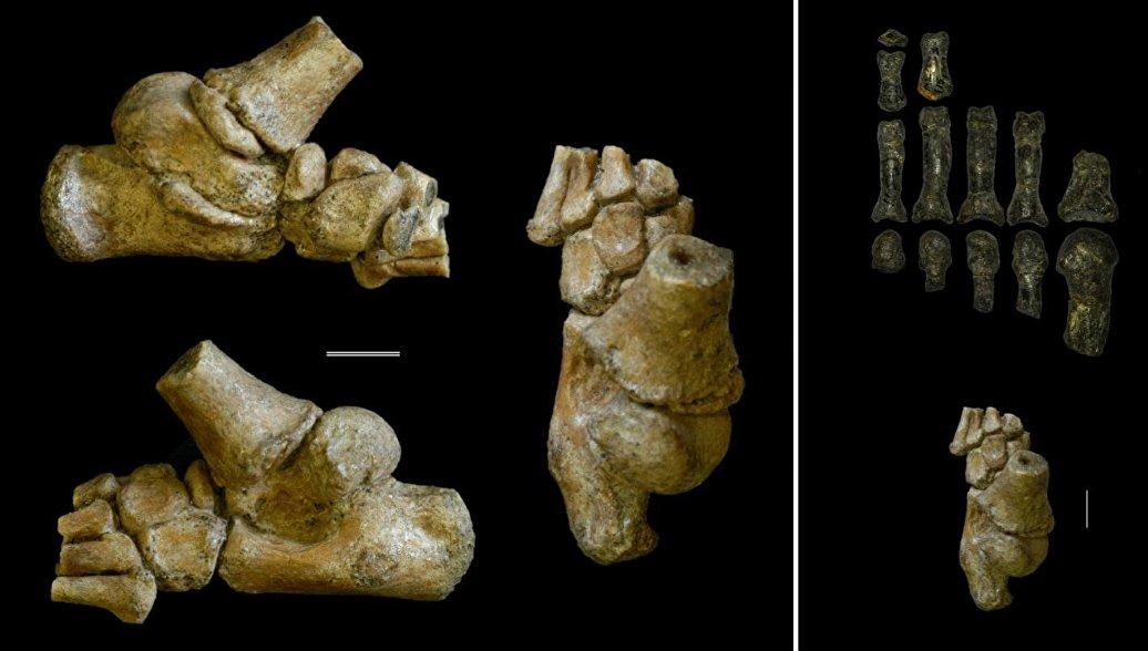 Ученые выяснили, где жили детеныши древнейших протолюдей