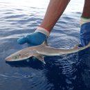 В США нашли новый вид акул, похожих на персонажей из аниме