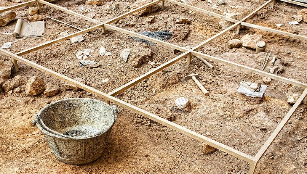 В Алжире нашли скелет слона, жившего три миллиона лет назад