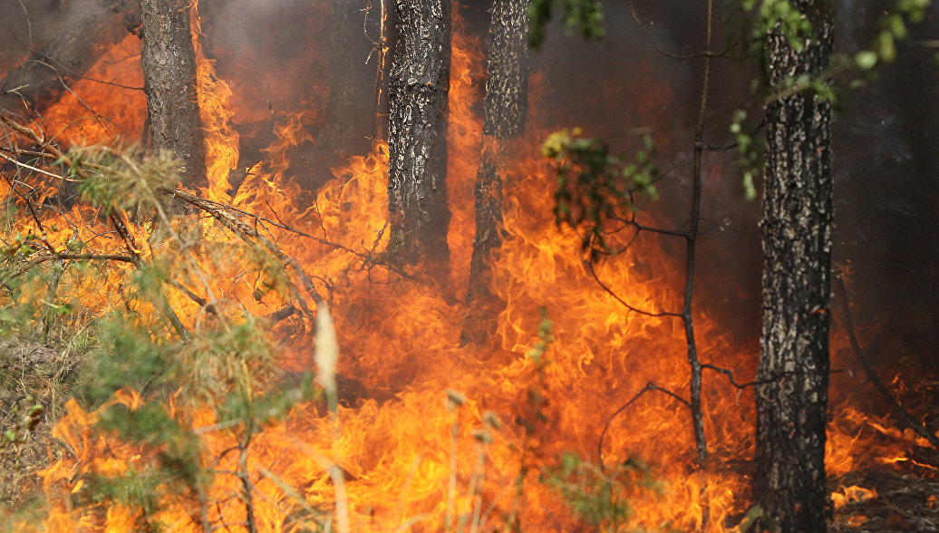 В Греции два человека погибли, более 20 ранены из-за лесного пожара