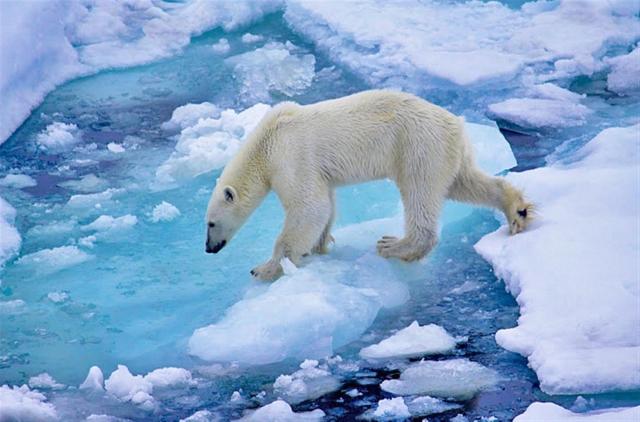 Все о невероятной Арктике