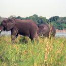 Слишком разумные: почему слоны ведут себя как люди