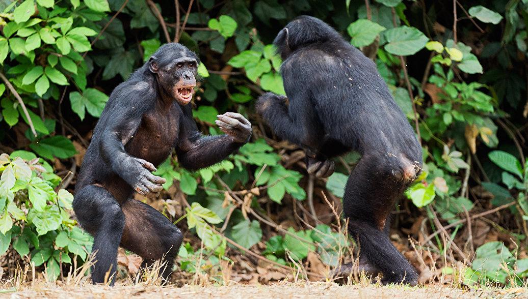 Прирожденные убийцы: животные, которые умеют и любят воевать
