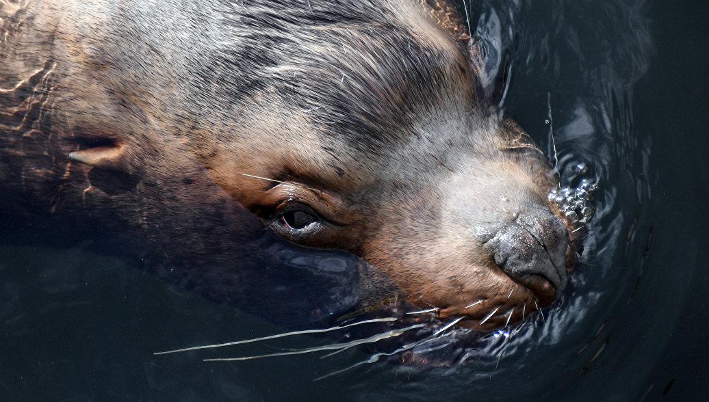 Камчатка готовится к празднику в честь морских млекопитающих