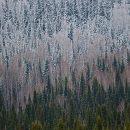 Почти 72 тыс деревьев высадили в Кемерово в этом году - власти
