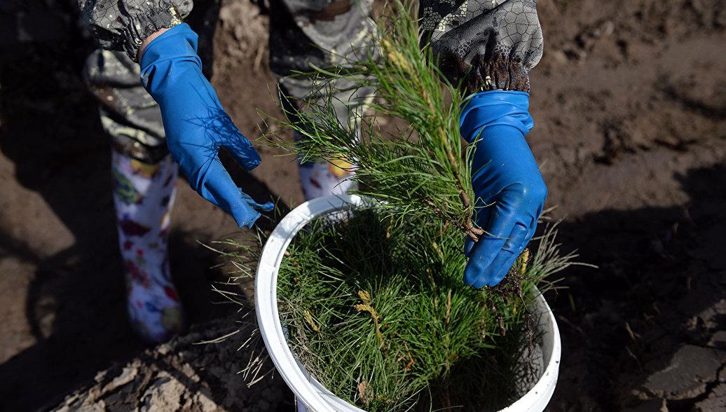 К 2020 году в Чувашии планируют восстановить тысячу га сгоревших лесов