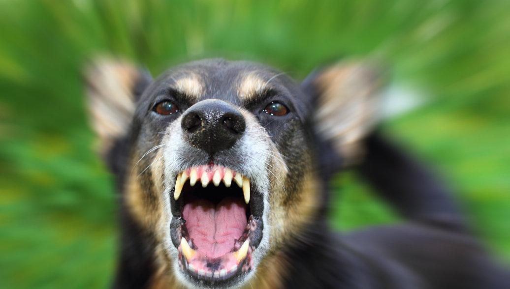В Госдуме прокомментировали нападение собак на заводчицу