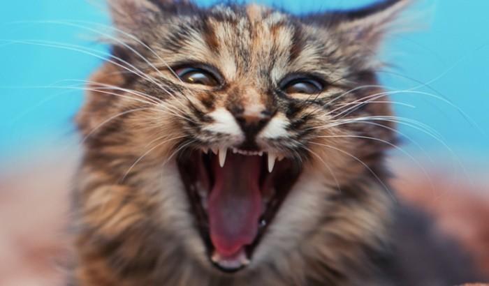 Анализ на наличие у кошки или собаки антител к вирусу Бешенства