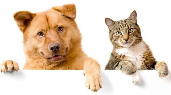 Товары для здоровья питомцев – ветеринарная интернет-аптека