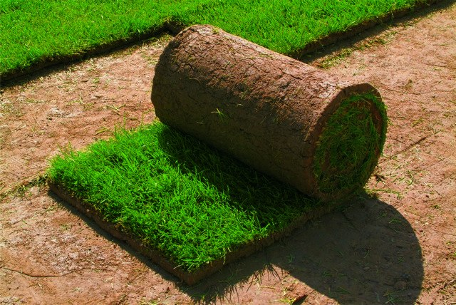 Продажа и укладка качественного рулонного газона в СПб